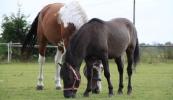 konie-055_0