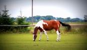konie-043