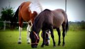 konie-055