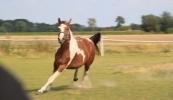 konie-227