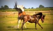 konie-234