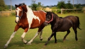 konie-266