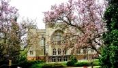 6900010_kornik-arboretum-zamek-z-za-magnolii-1