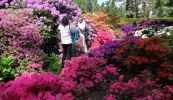 arboretum-park-kornik-galeria-7
