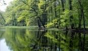 20090730120229_krzysztof-moroz-rezerwat-czeszewski-las